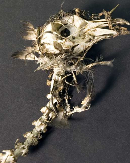skullhair