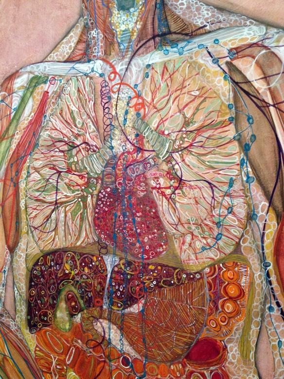 chest&abdomen
